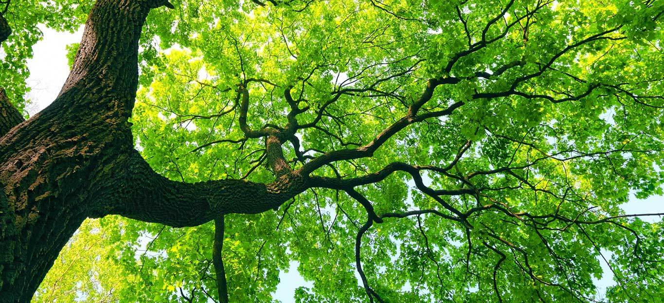Common Trees In Georgia and How to Spot Them | Premier Tree Solutions
