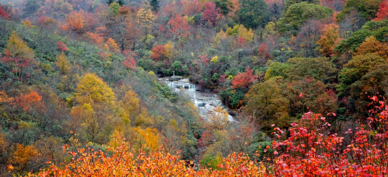 Fall Foliage Festival The 6 Most Colorful Autumn Trees In Georgia