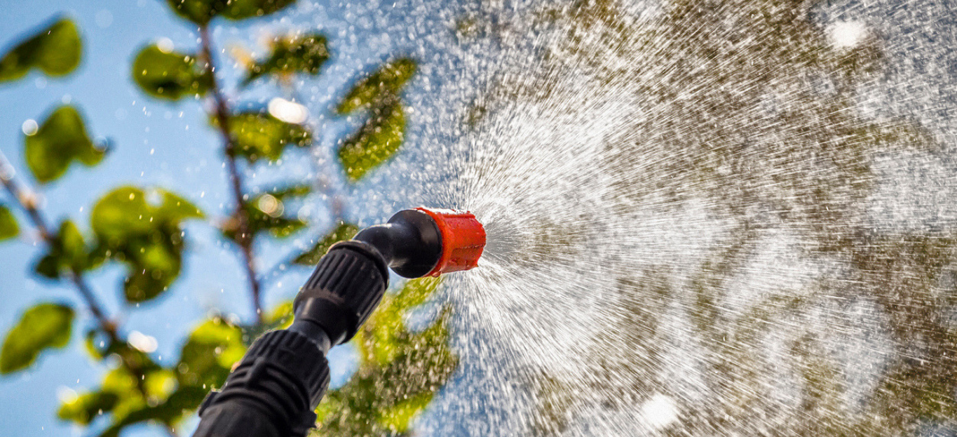 Hose spraying for pests during the summer season.