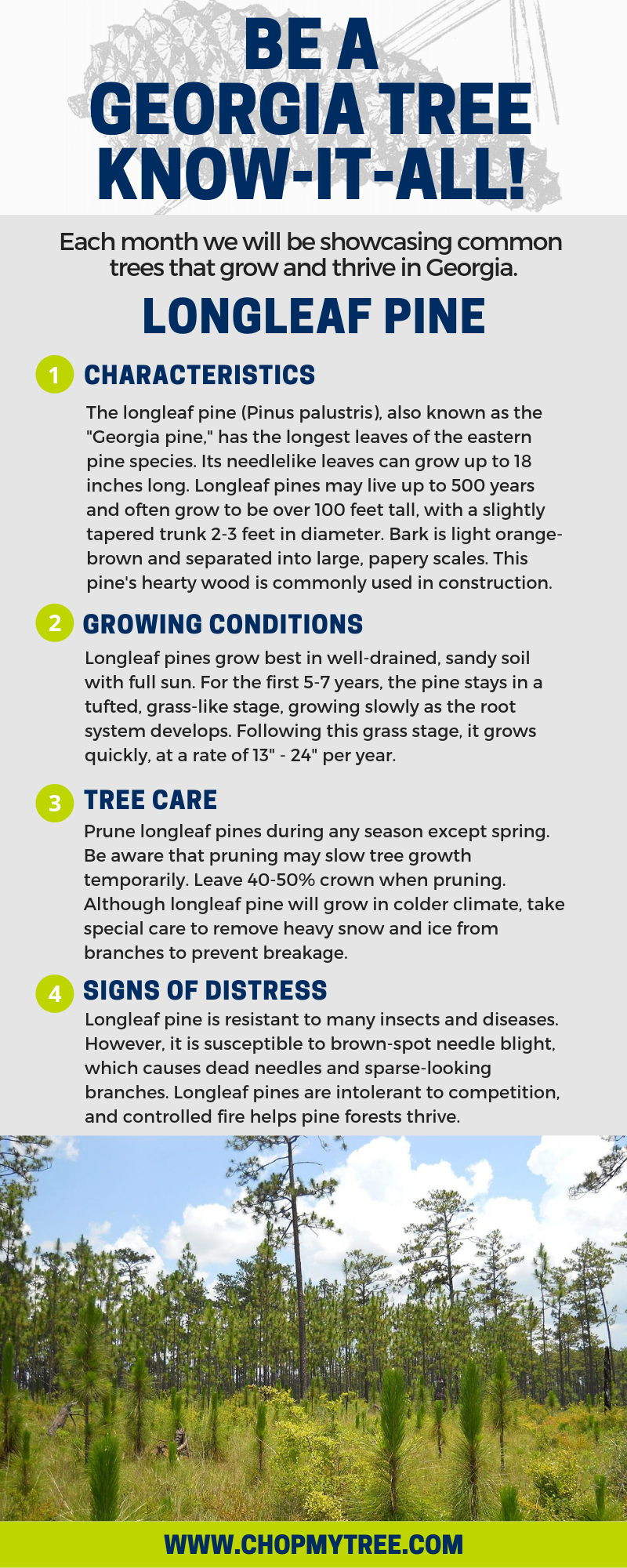Longleaf Pine Text Infographic