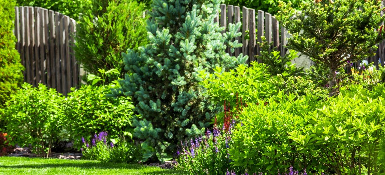 A photo of the best shrubs for Georgia soil