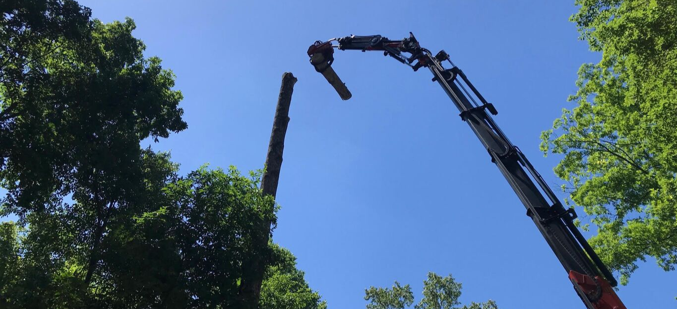 Photo of our JAWS equipment removing a tree.