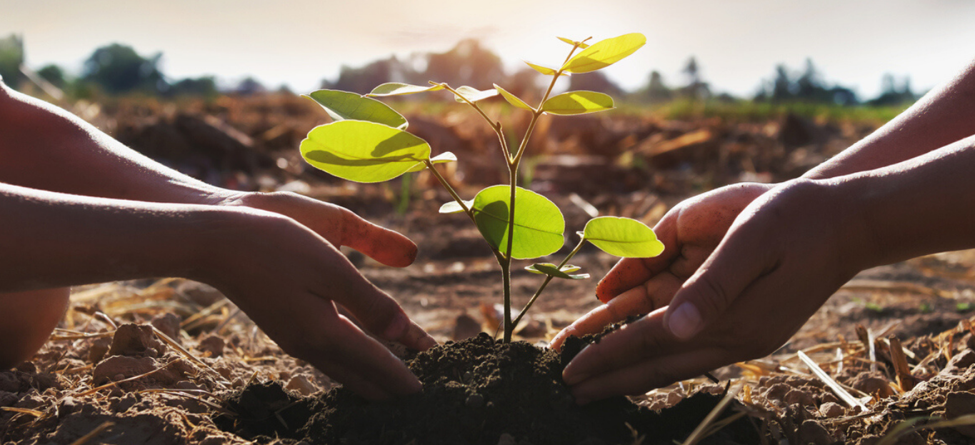 Two sets of hands helping to plant a sapling, an example of Nonprofits Working to Save Trees.