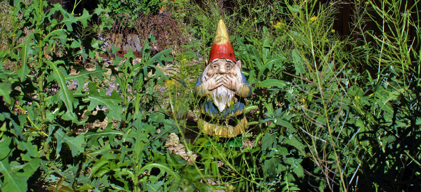Photo of an overgrown yard with a gnome standing in the middle, showcasing Stop Tree-son on Your Yard: Why Your Vegetation Needs to Be Cleared.