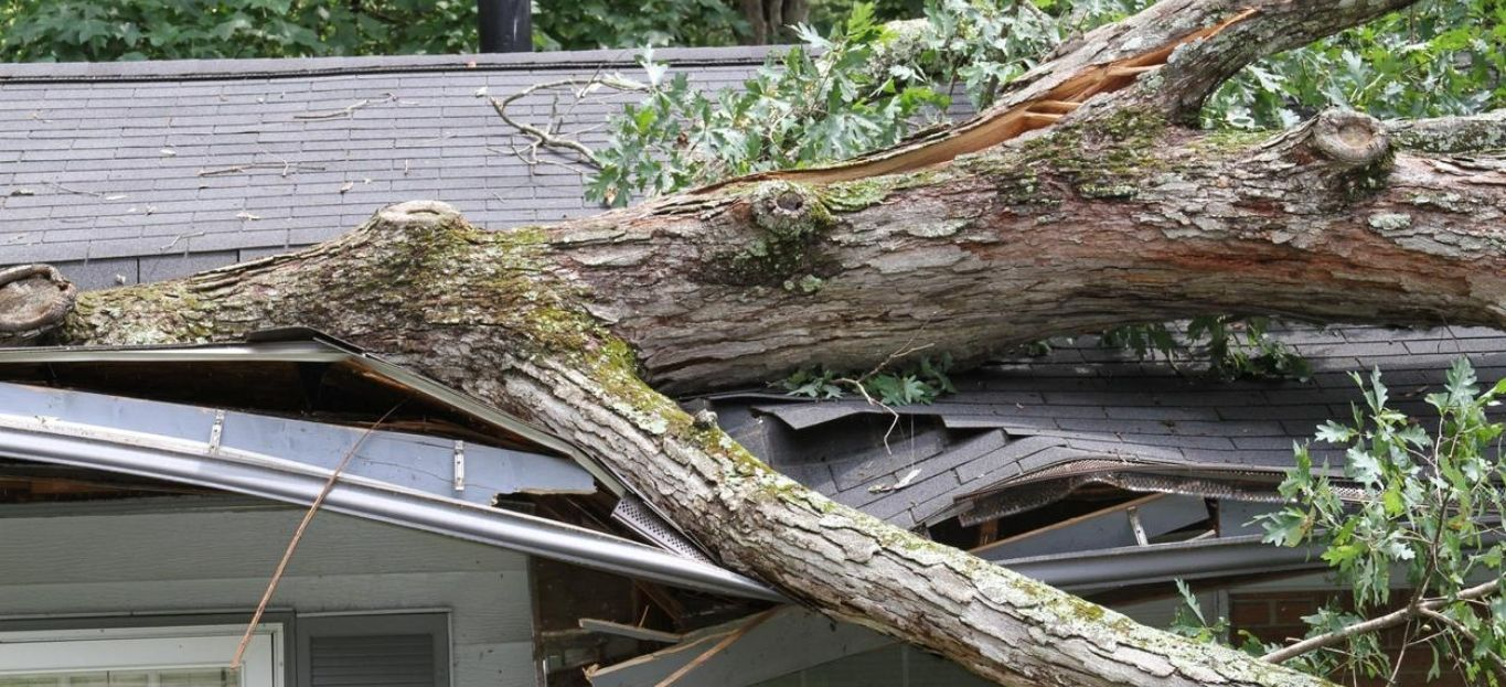 Large white oak tree punctures roof on house, highlighting the need for storm cleanup services.