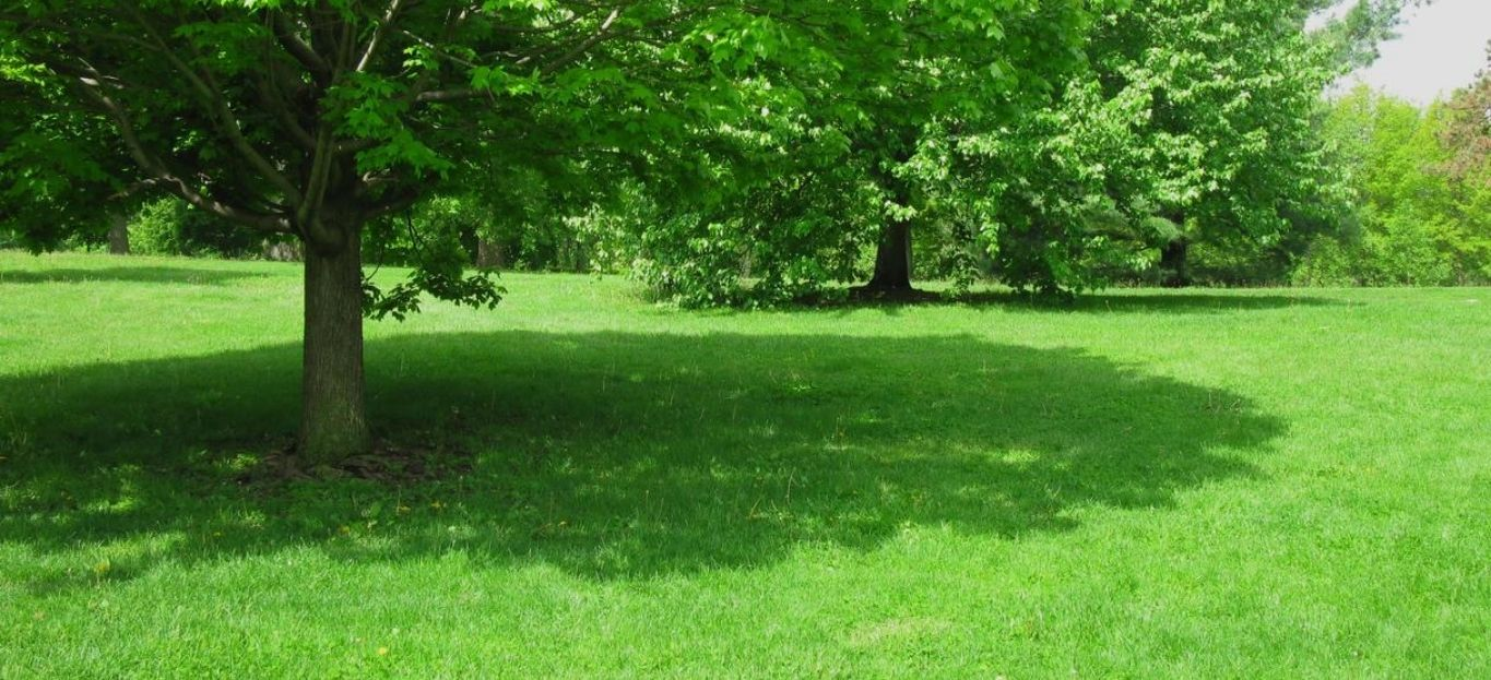 A tree and its shadow on a sunny day at Vander Veer Park in Iowa, showing trees that produce the best shade.
