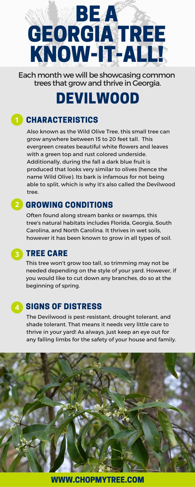 Devilwood Tree infographic