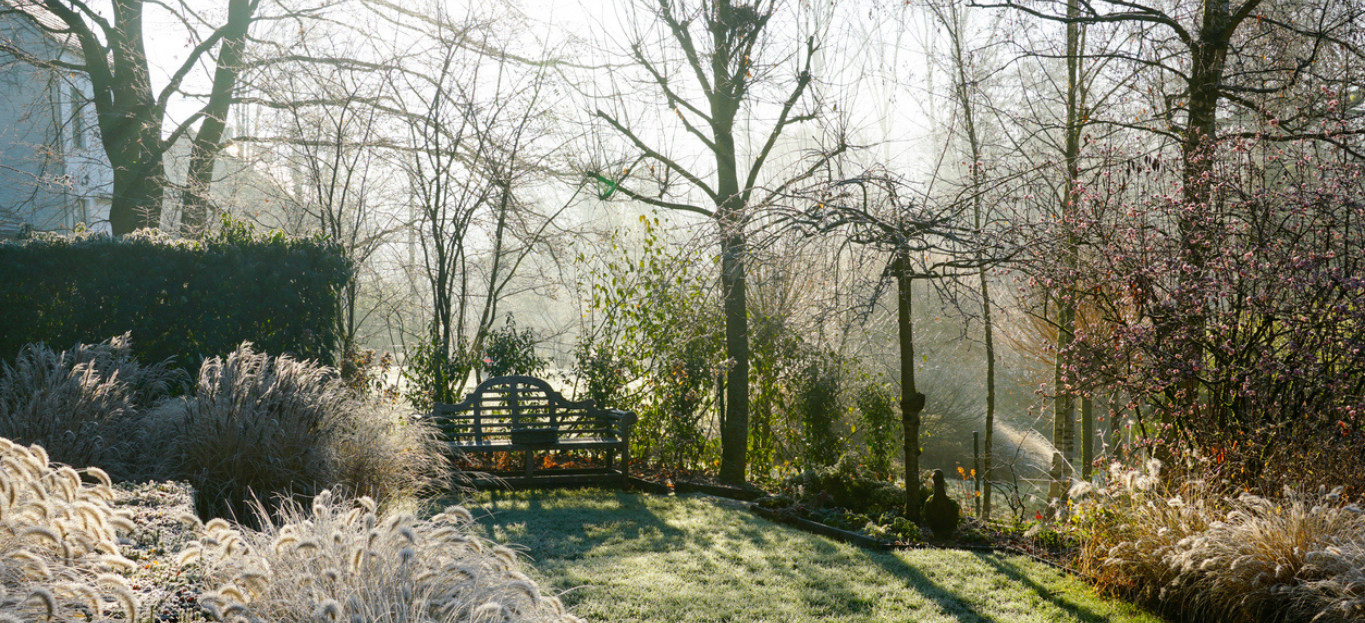 A landscape view on a winter morning in frost & sunlight of a garden, plant borders, green frosty grass lawn brown, highlighting How to Plan for Fall and Winter Tree Care.