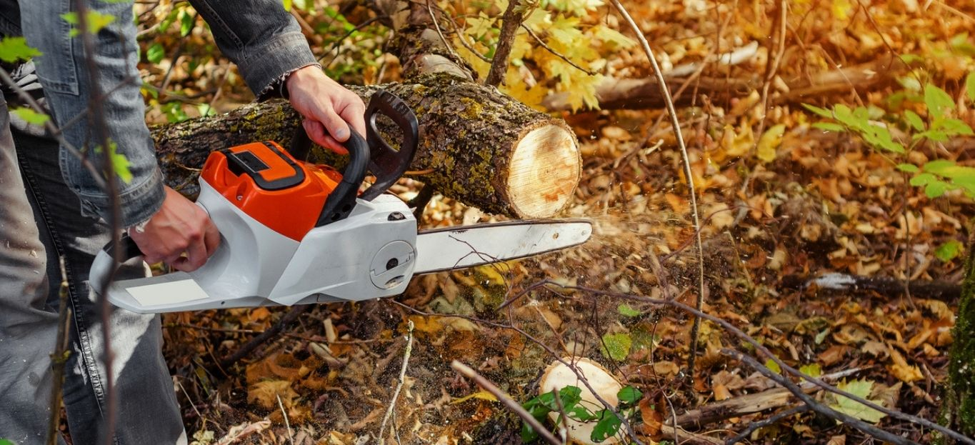 Lumberjack cuts down a lying tree with a chainsaw in the forest, close-up on the process of cutting down, highlighting the different ways to remove trees.