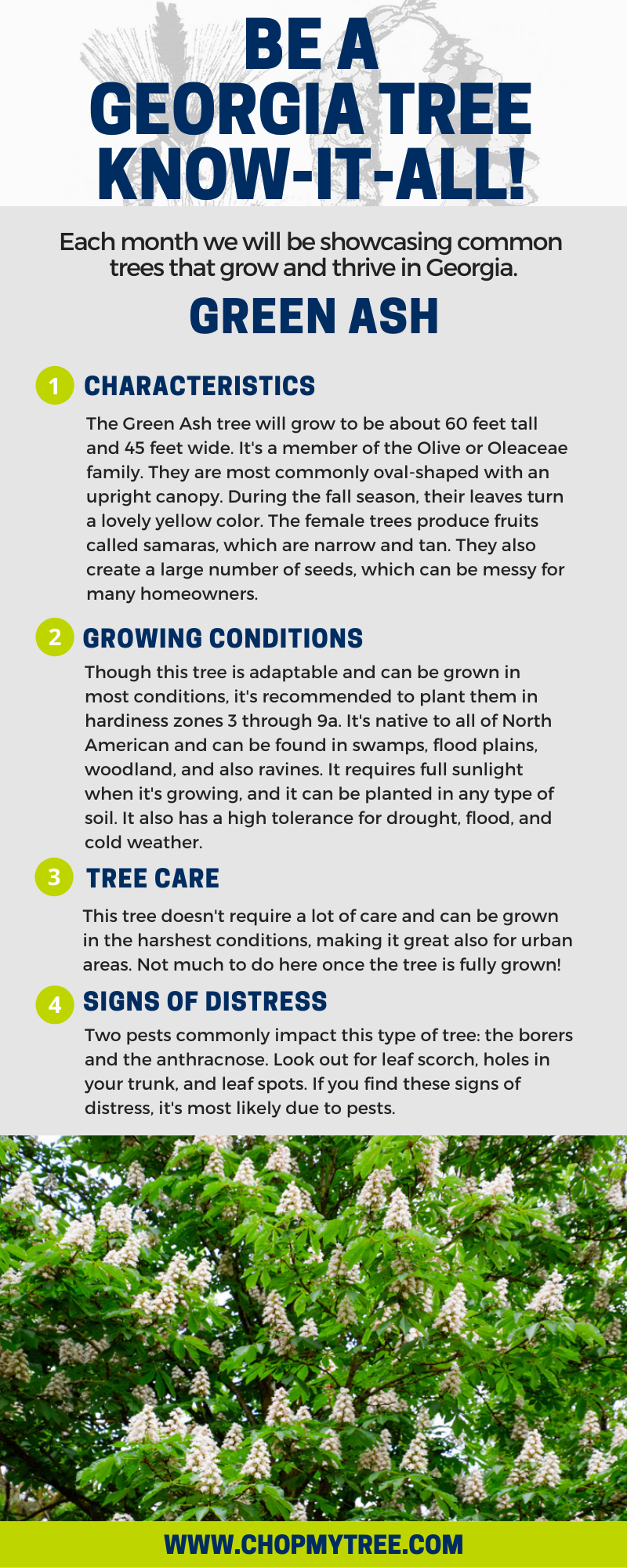 Green Ash Tree Infographic